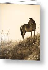 Wild Horse On The Beach Greeting Card