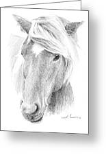 Wild Horse Pencil Portrait Greeting Card