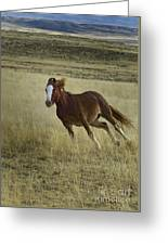 Wild Horse Running-signed-#7273 Greeting Card