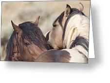 Wild Horse Secrets Greeting Card