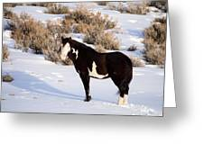 Wild Horse Stallion Greeting Card