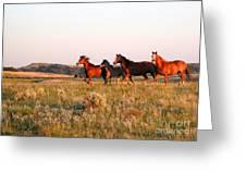 Wild Horses At Sunset Greeting Card