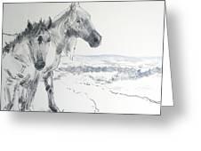 Wild Horses Drawing Greeting Card