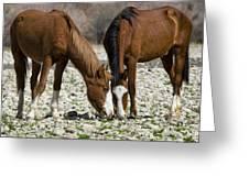 Wild Horses Grazing  Greeting Card