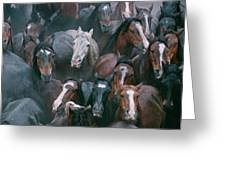 Wild Horses In A Pen Greeting Card