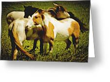 Wild Horses In California Series 14 Greeting Card