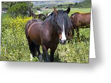 Wild Horses In California Series 4 Greeting Card