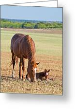 Wild Horses Mother And Baby Greeting Card