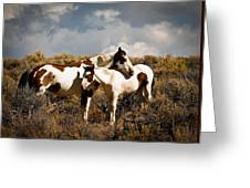 Wild Horses Mother And Child Greeting Card