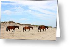Wild Horses Of Corolla - Outer Banks Obx Greeting Card