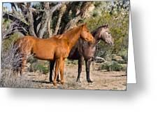 Wild Horses Of Joshua Tree Greeting Card