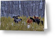 Wild Horses Of The Ghost Forest Greeting Card