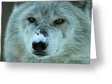 Wild Intensity Greeting Card