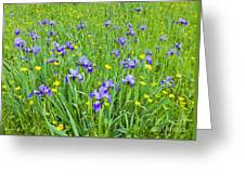 Wild Iris Patch Greeting Card