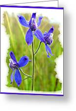 Wild Larkspurs Greeting Card