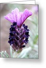 Wild Lavender Greeting Card