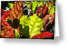 Wild Lettuce Greeting Card
