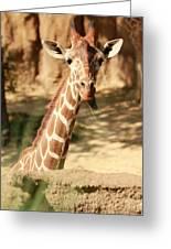 Wild Look Greeting Card