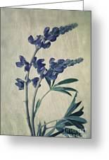 Wild Lupine Greeting Card