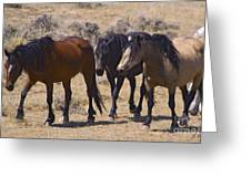 Wild Mares-signed-#0271 Greeting Card