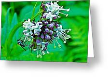 Wild Mint On Great Glacier Trail In Glacier National Park-british Columbia Greeting Card