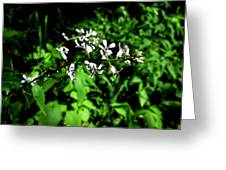 Wild Missouri Flowers Greeting Card