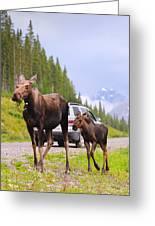 Wild Moose Greeting Card