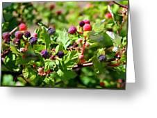 Wild Mountain Berries Greeting Card