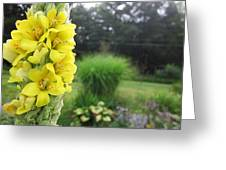 Wild Mullein Greeting Card