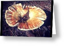 Wild Mushroom New Hampshire I Greeting Card