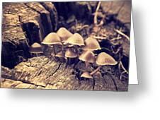 Wild Mushrooms Greeting Card by Amanda Elwell