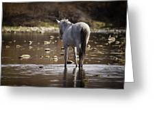 Wild Mustang On The River  Greeting Card