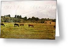 Wild Mustangs Carpe Diem Greeting Card