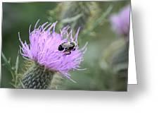 Wild Nectar Greeting Card