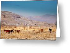 Wild Nevada Mustang Herd Greeting Card