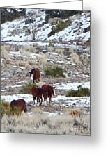 Wild Nevada Mustangs 2 Greeting Card