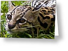 Wild Ocelot Greeting Card