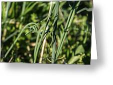 Wild Onion Grasp Greeting Card