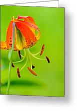 Wild Orange Lilies Greeting Card