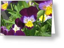 Wild Pansies Or Johnny Jump-ups 1 Greeting Card