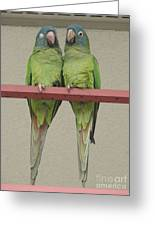 Wild Parrots Greeting Card