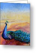 Wild Peacock Greeting Card