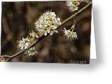 Wild Pear Greeting Card
