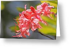 Wild Pink Azalea At Moore State Park Greeting Card