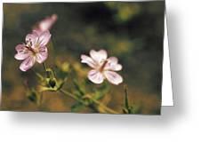 Wild Pink Greeting Card
