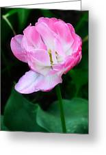 Wild Pink Rose Greeting Card