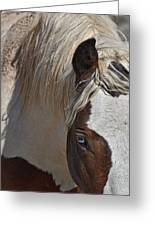Wild Pinto Greeting Card