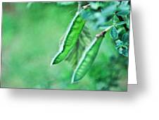 Wild Pods Greeting Card