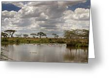 Wild Pond Greeting Card