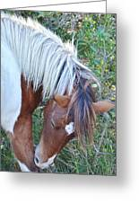 Wild Ponies Of Assateague 21 Greeting Card